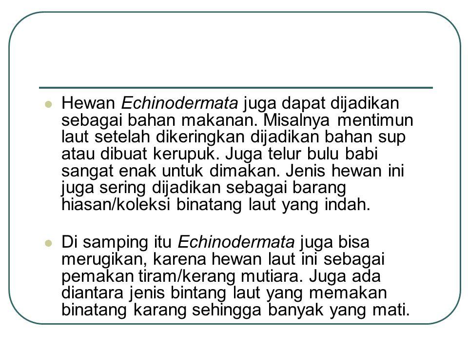 Hewan Echinodermata juga dapat dijadikan sebagai bahan makanan