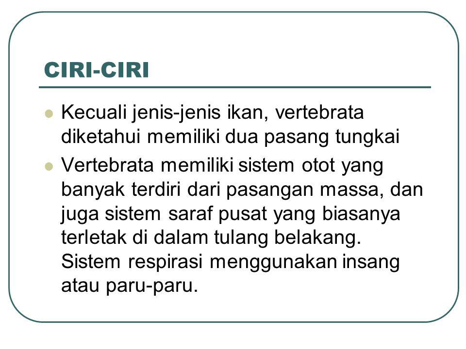 CIRI-CIRI Kecuali jenis-jenis ikan, vertebrata diketahui memiliki dua pasang tungkai.