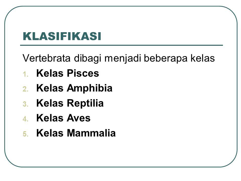 KLASIFIKASI Vertebrata dibagi menjadi beberapa kelas Kelas Pisces