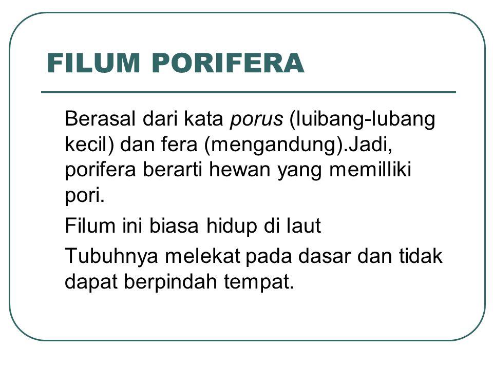 FILUM PORIFERA Berasal dari kata porus (luibang-lubang kecil) dan fera (mengandung).Jadi, porifera berarti hewan yang memilliki pori.