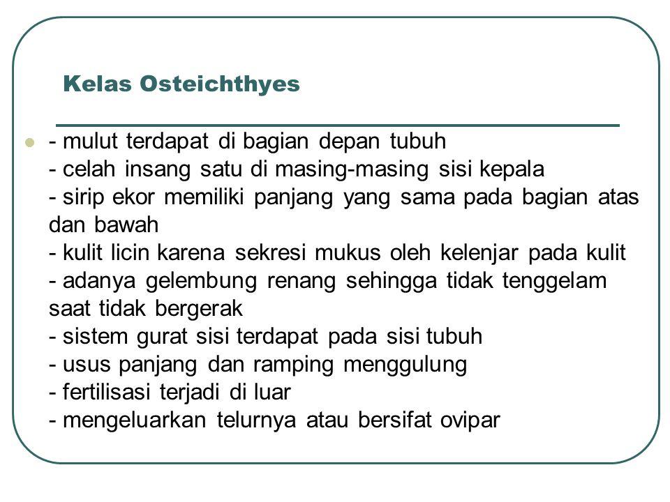 Kelas Osteichthyes