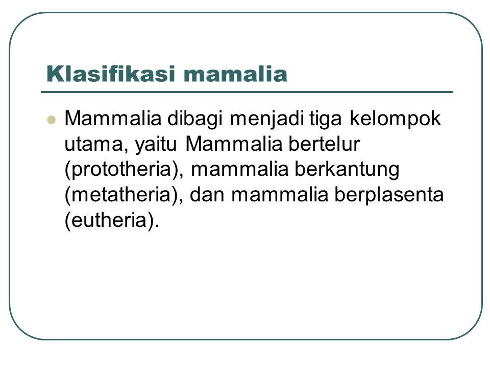 Klasifikasi mamalia