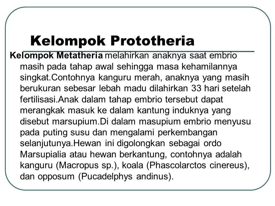 Kelompok Prototheria