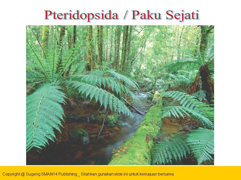 Pteridopsida / Paku Sejati
