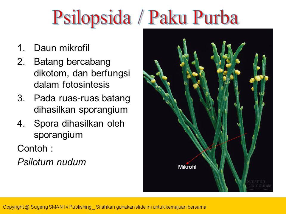 Psilopsida / Paku Purba