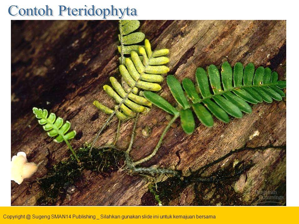 Contoh Pteridophyta