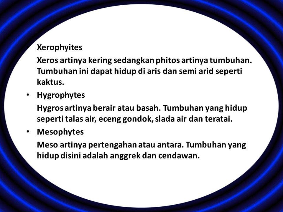 Xerophyites Xeros artinya kering sedangkan phitos artinya tumbuhan. Tumbuhan ini dapat hidup di aris dan semi arid seperti kaktus.