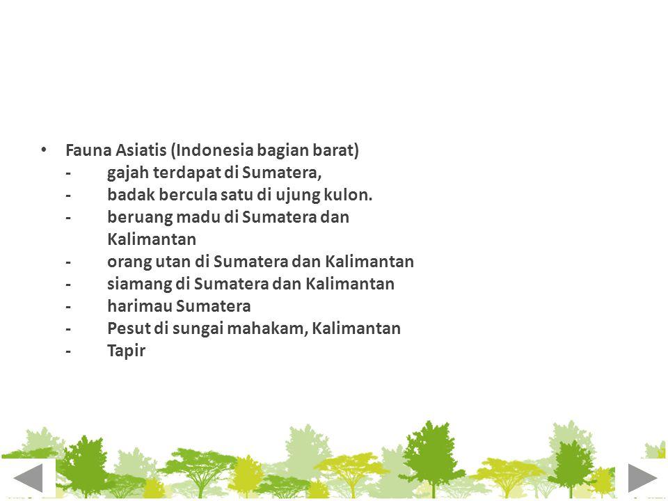 Fauna Asiatis (Indonesia bagian barat)