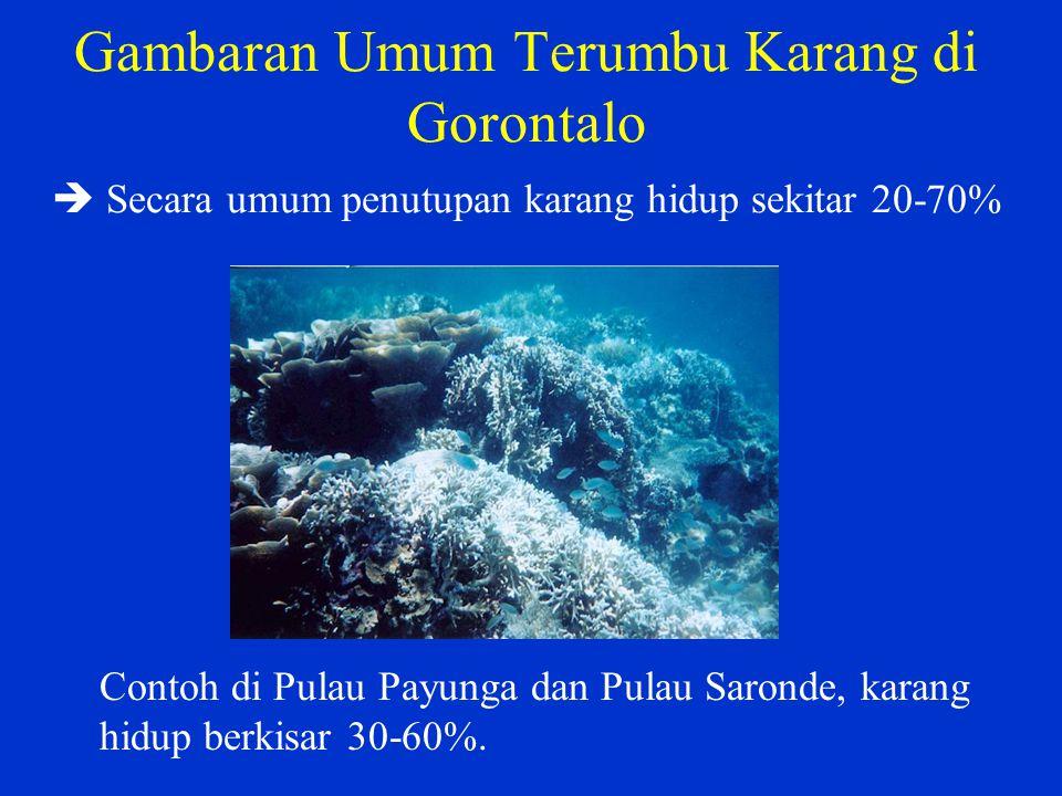 Gambaran Umum Terumbu Karang di Gorontalo  Secara umum penutupan karang hidup sekitar 20-70%