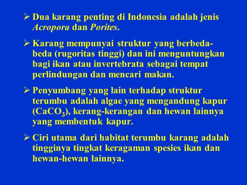 Dua karang penting di Indonesia adalah jenis Acropora dan Porites.
