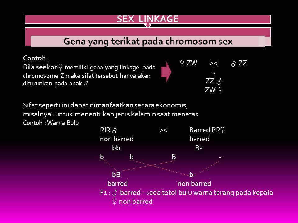 Gena yang terikat pada chromosom sex