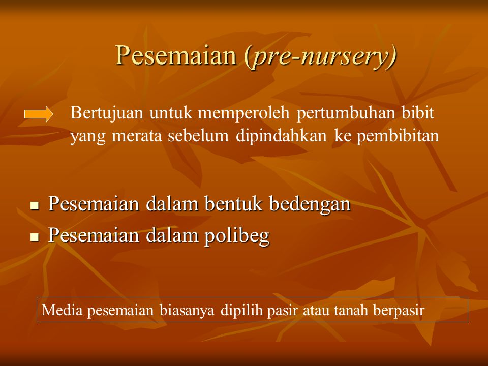 Pesemaian (pre-nursery)