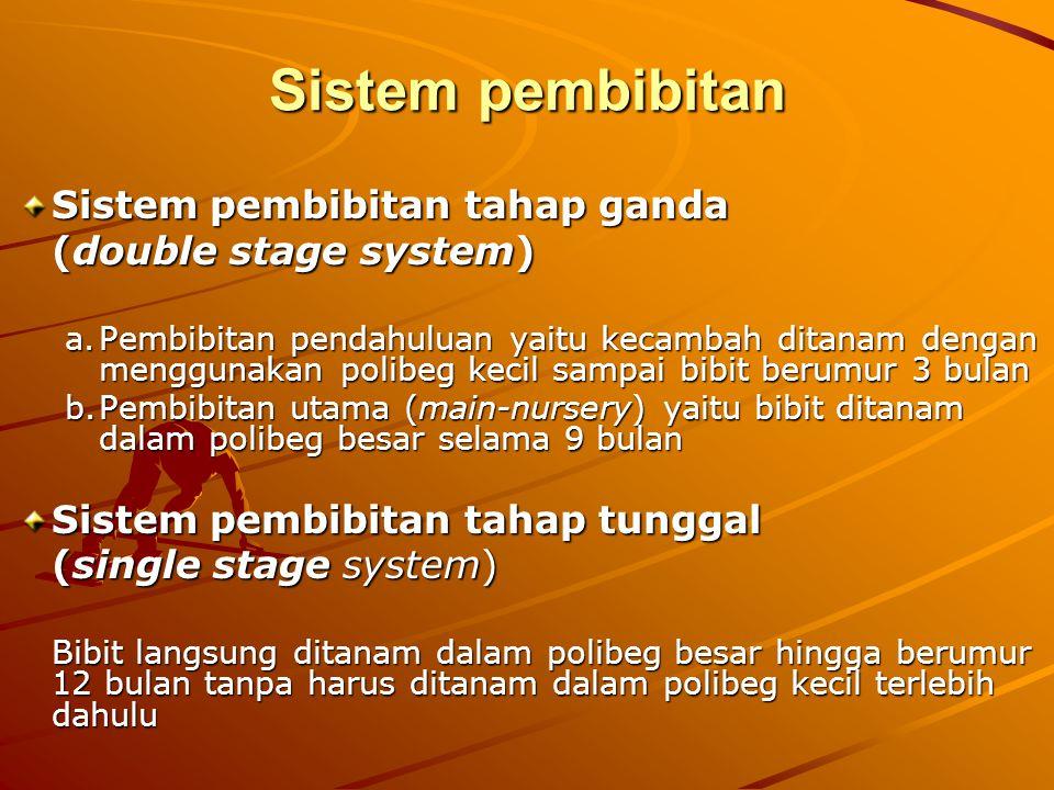 Sistem pembibitan Sistem pembibitan tahap ganda (double stage system)