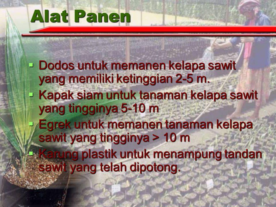Alat Panen Dodos untuk memanen kelapa sawit yang memiliki ketinggian 2-5 m. Kapak siam untuk tanaman kelapa sawit yang tingginya 5-10 m.