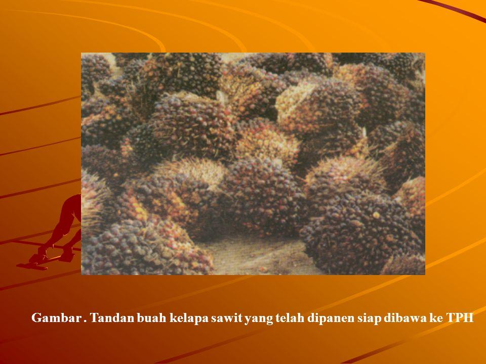 Gambar . Tandan buah kelapa sawit yang telah dipanen siap dibawa ke TPH