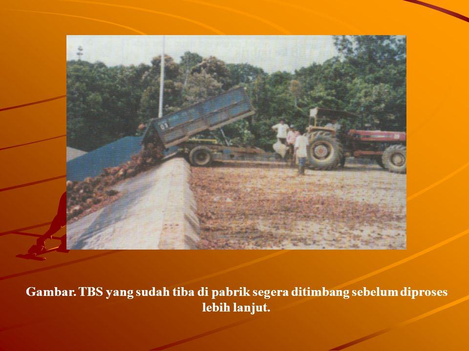 Gambar. TBS yang sudah tiba di pabrik segera ditimbang sebelum diproses lebih lanjut.