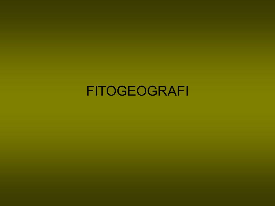 FITOGEOGRAFI