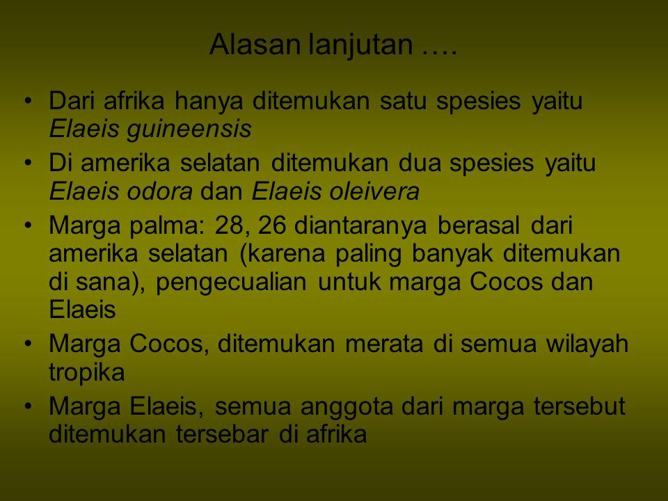 Alasan lanjutan …. Dari afrika hanya ditemukan satu spesies yaitu Elaeis guineensis.
