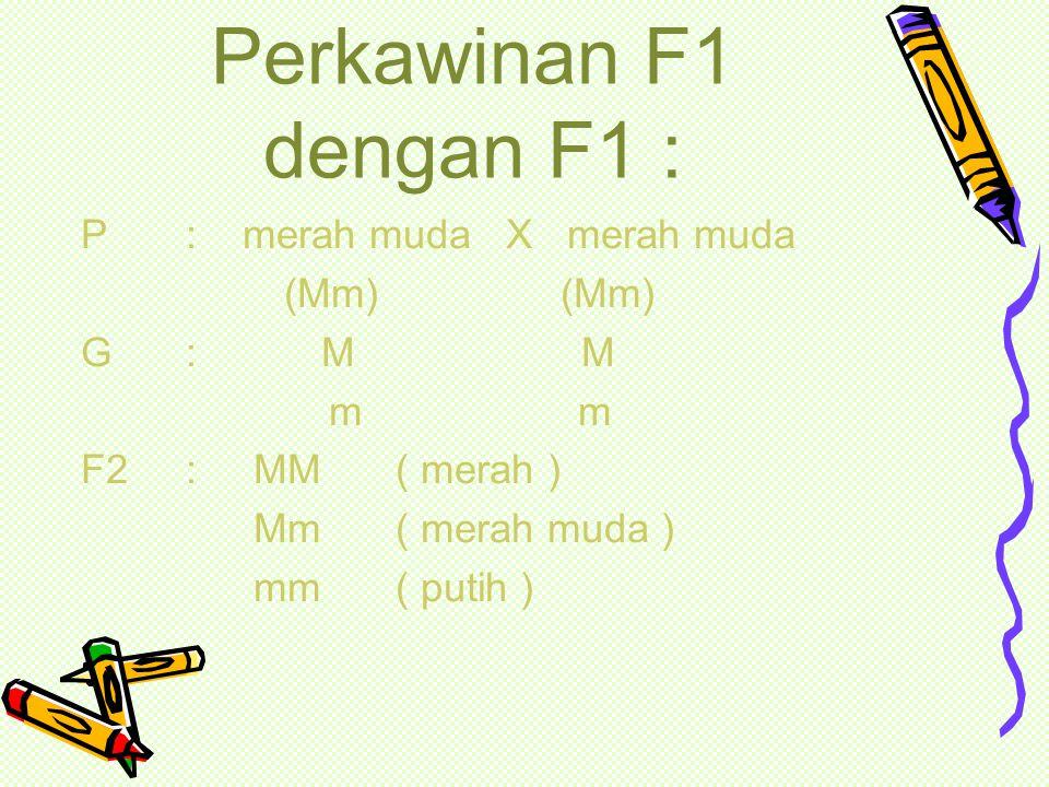 Perkawinan F1 dengan F1 : P : merah muda X merah muda (Mm) (Mm)