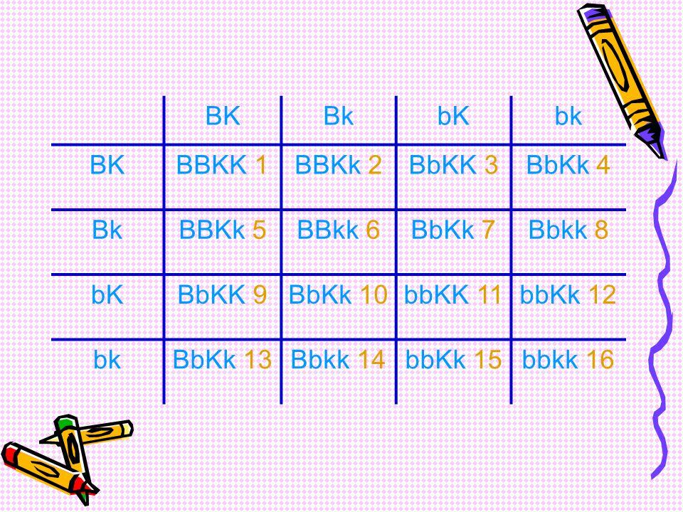 BK Bk. bK. bk. BBKK 1. BBKk 2. BbKK 3. BbKk 4. BBKk 5. BBkk 6. BbKk 7. Bbkk 8. BbKK 9. BbKk 10.