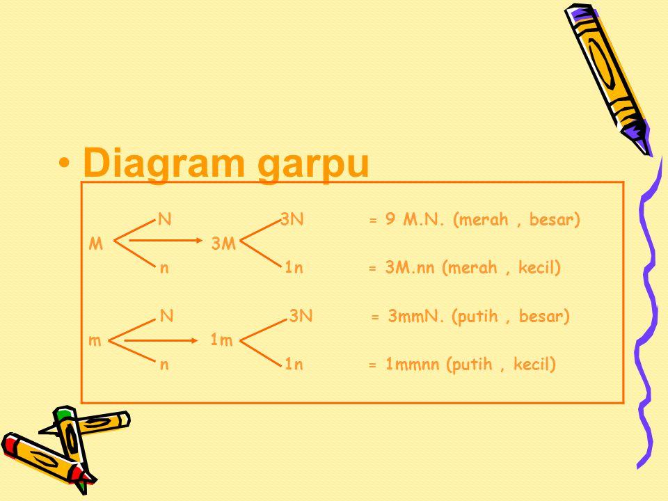 Diagram garpu N 3N = 9 M.N. (merah , besar) M 3M