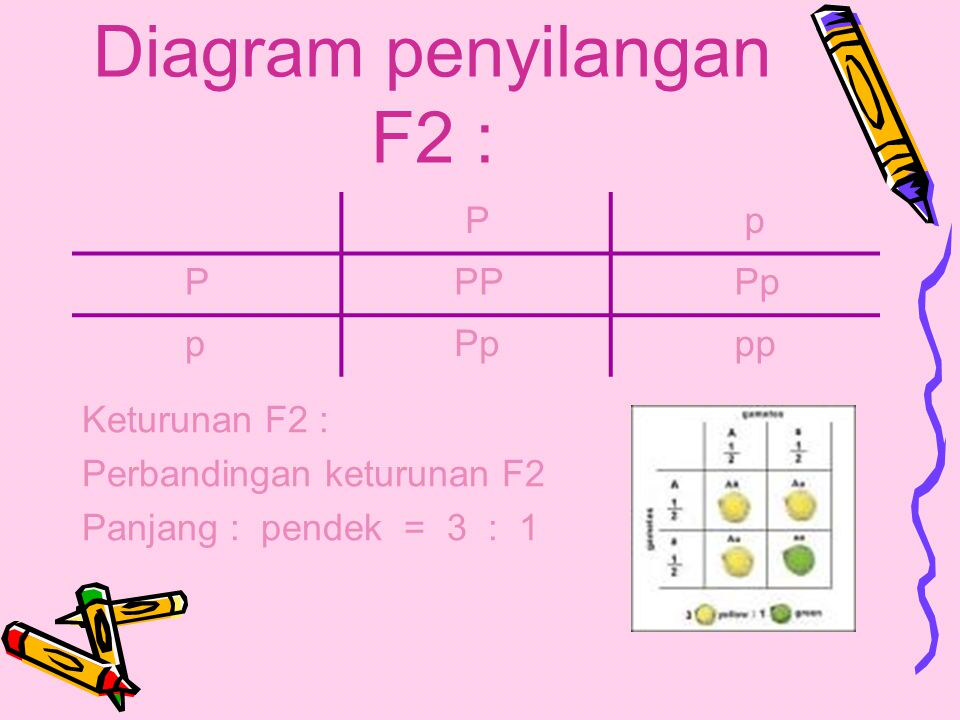 Diagram penyilangan F2 :