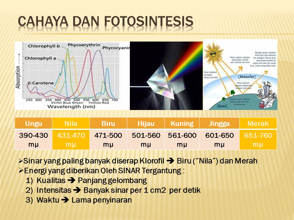 Cahaya dan Fotosintesis