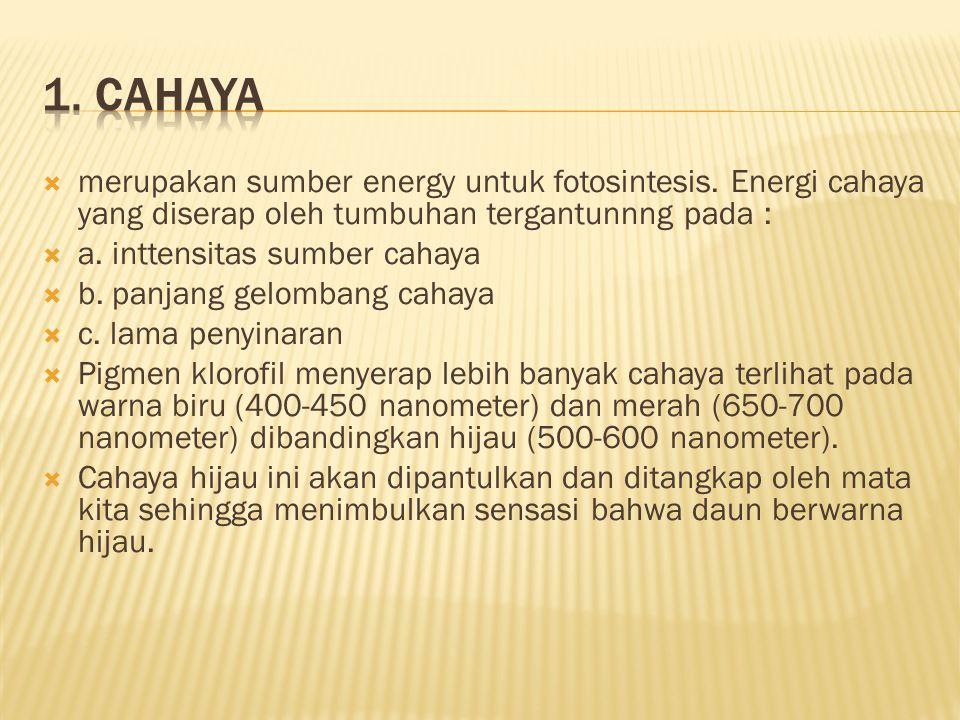 1. Cahaya merupakan sumber energy untuk fotosintesis. Energi cahaya yang diserap oleh tumbuhan tergantunnng pada :