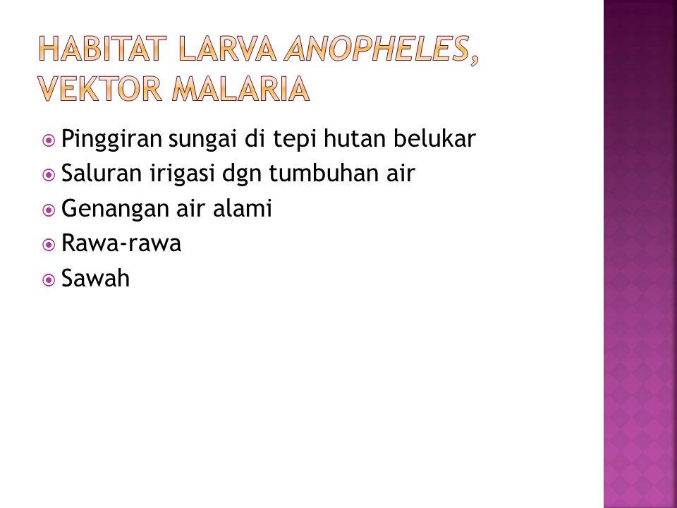 Habitat larva Anopheles, Vektor Malaria