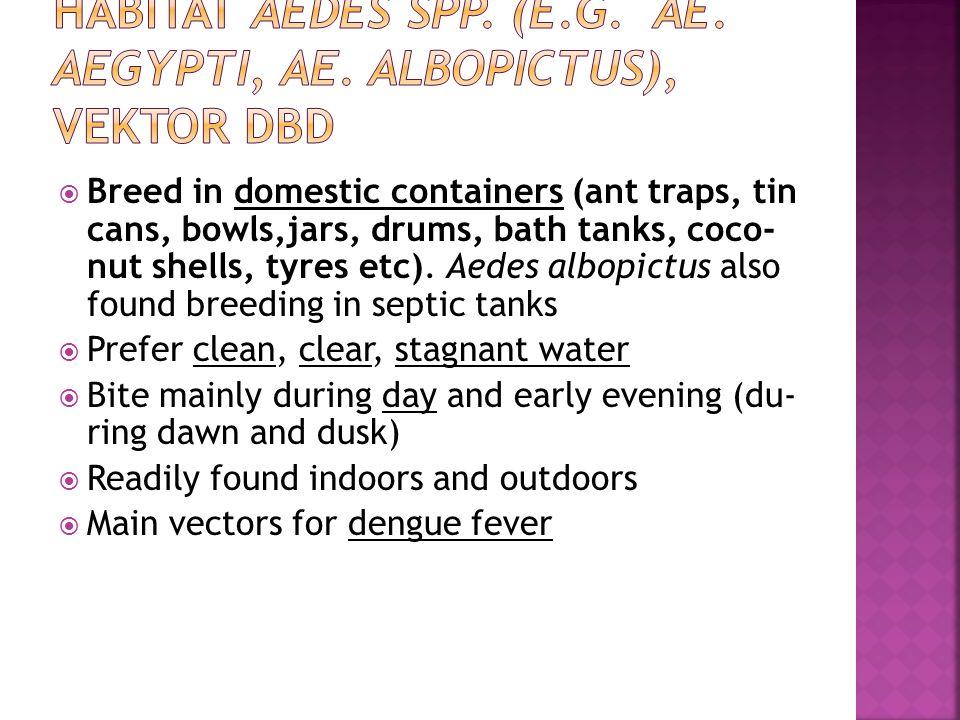 Habitat Aedes spp. (e.g. Ae. aegypti, Ae. albopictus), Vektor DBD