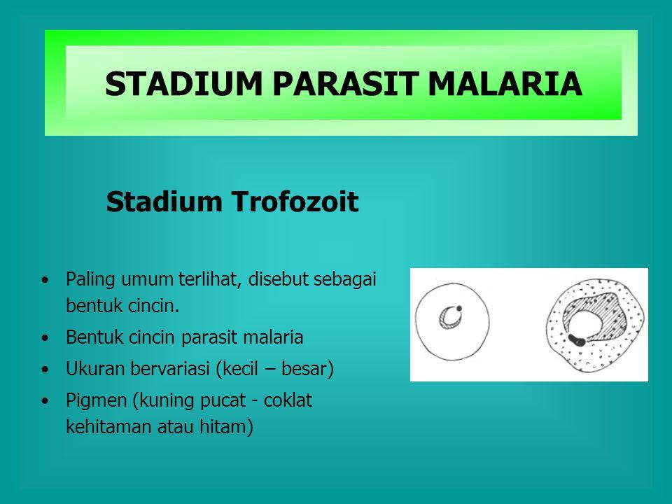 STADIUM PARASIT MALARIA