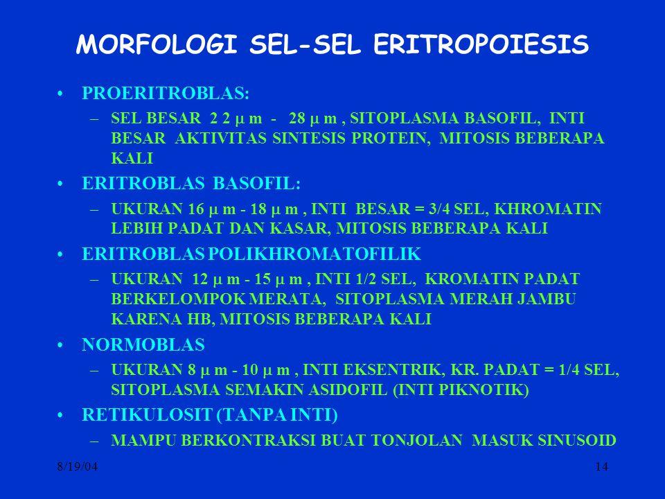 MORFOLOGI SEL-SEL ERITROPOIESIS