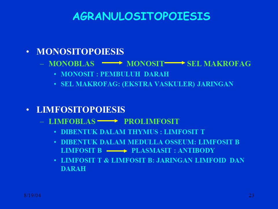AGRANULOSITOPOIESIS MONOSITOPOIESIS LIMFOSITOPOIESIS
