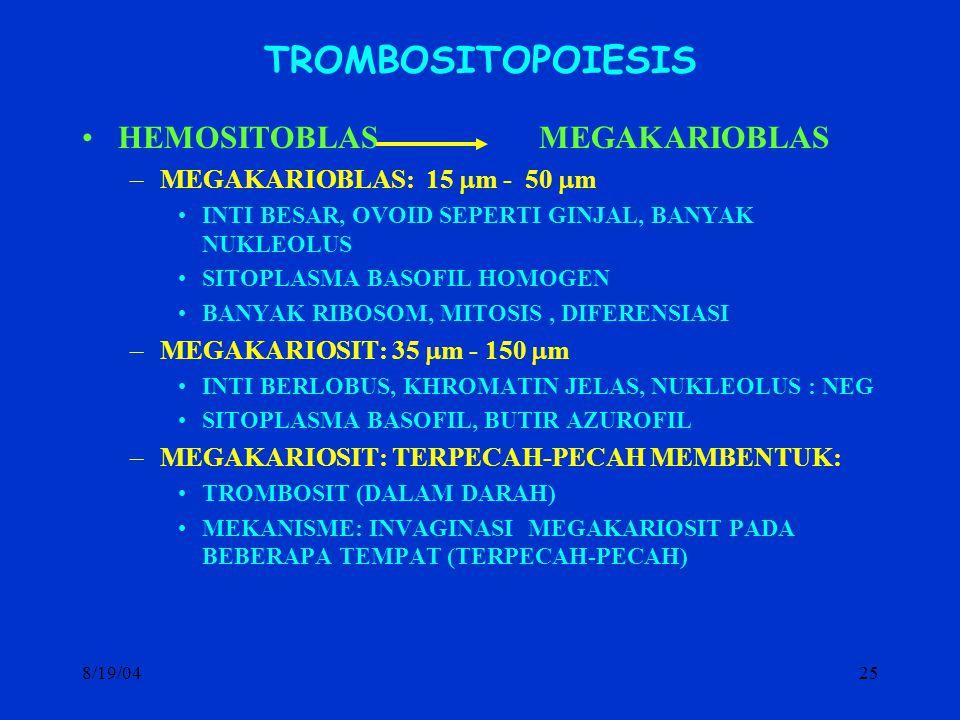 TROMBOSITOPOIESIS HEMOSITOBLAS MEGAKARIOBLAS