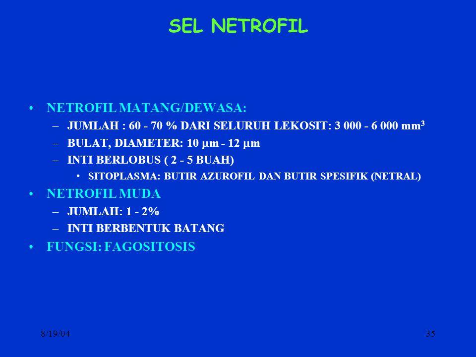 SEL NETROFIL NETROFIL MATANG/DEWASA: NETROFIL MUDA FUNGSI: FAGOSITOSIS