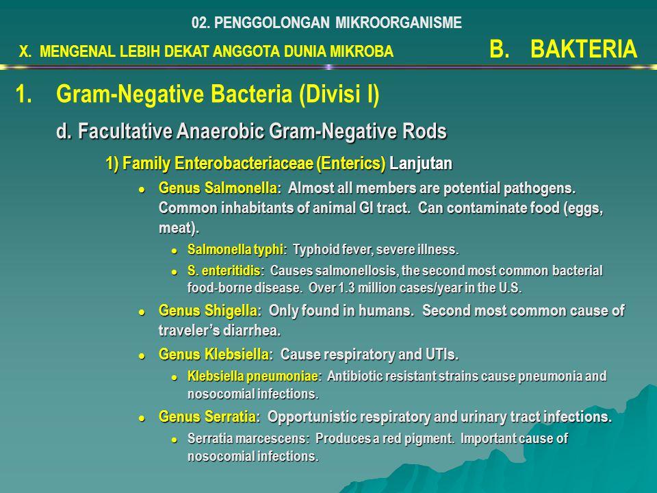 Gram-Negative Bacteria (Divisi I)