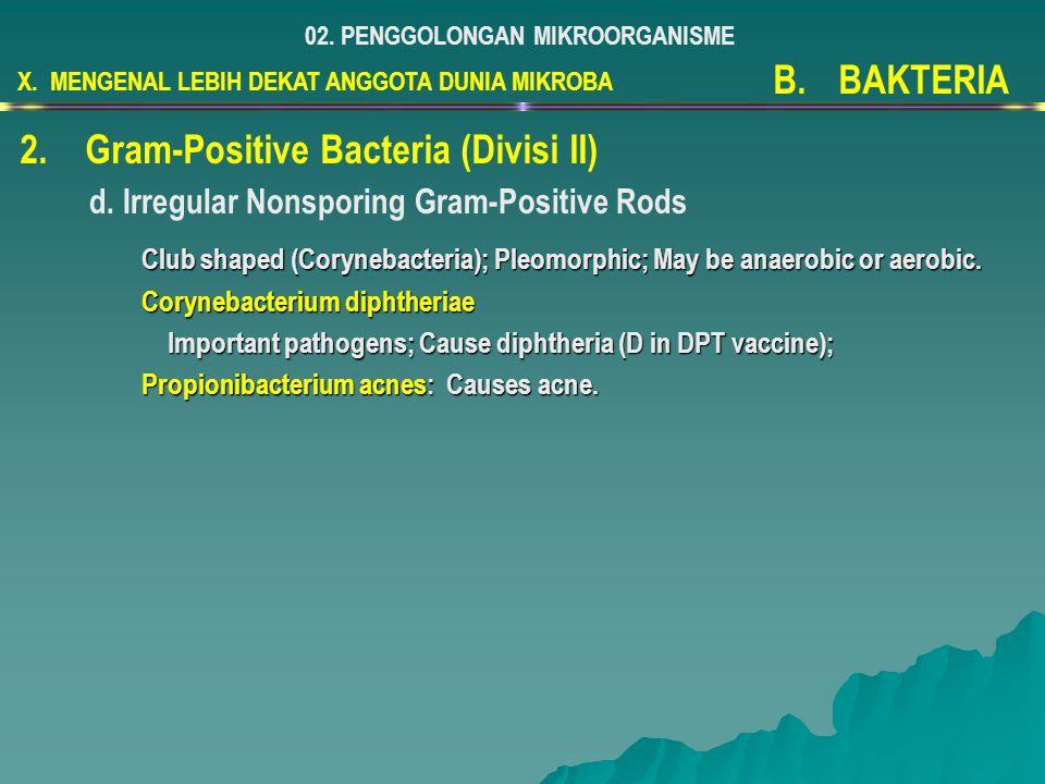 Gram-Positive Bacteria (Divisi II)