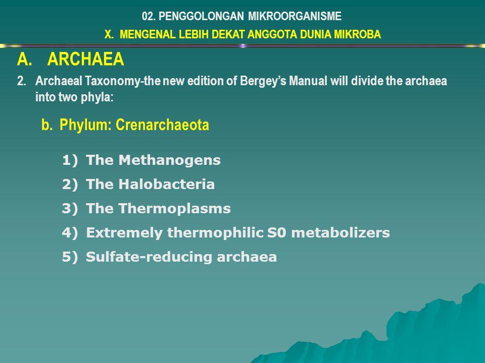 ARCHAEA Phylum: Crenarchaeota