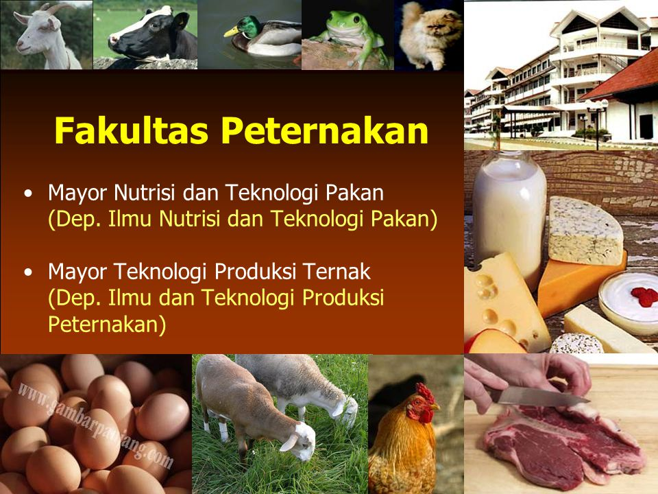 Fakultas Peternakan Mayor Nutrisi dan Teknologi Pakan