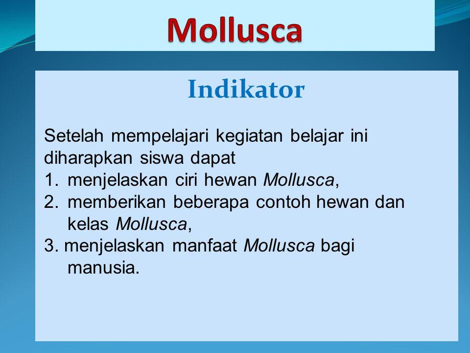 Mollusca Indikator. Setelah mempelajari kegiatan belajar ini diharapkan siswa dapat. menjelaskan ciri hewan Mollusca,