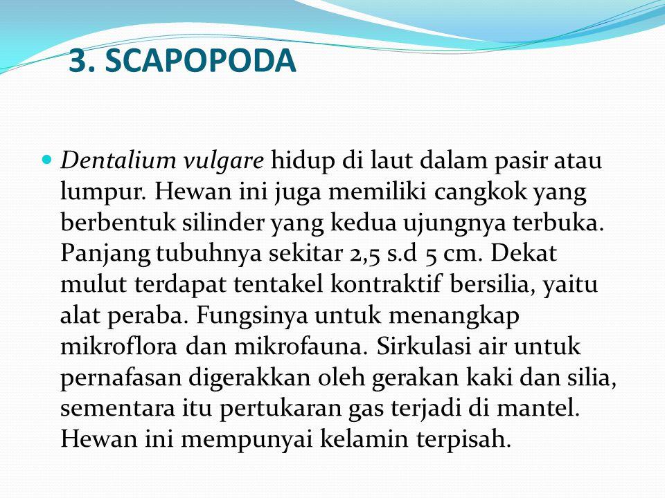 3. SCAPOPODA