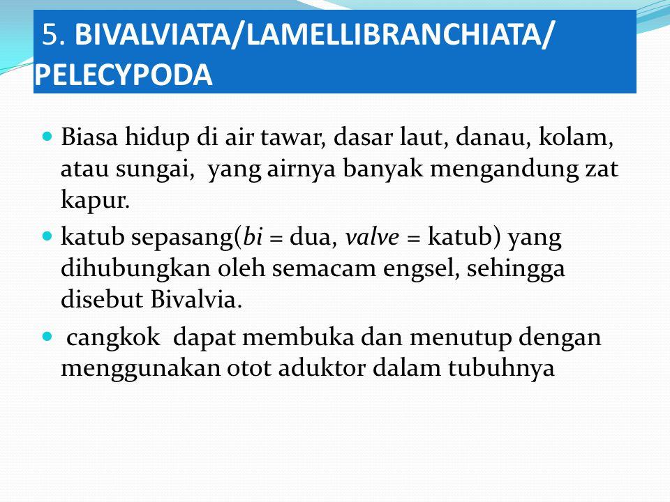 5. BIVALVIATA/LAMELLIBRANCHIATA/ PELECYPODA