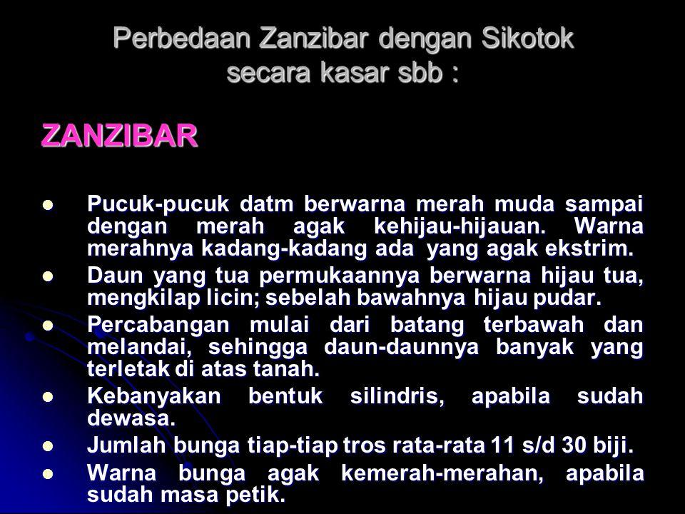 Perbedaan Zanzibar dengan Sikotok secara kasar sbb :