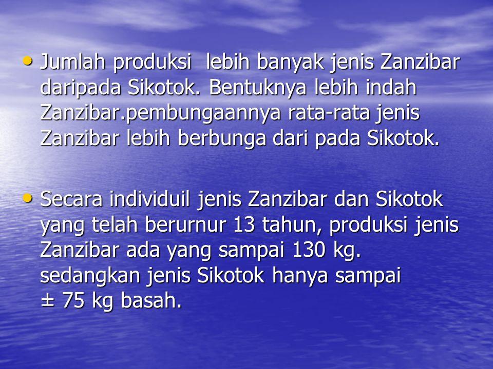 Jumlah produksi lebih banyak jenis Zanzibar daripada Sikotok