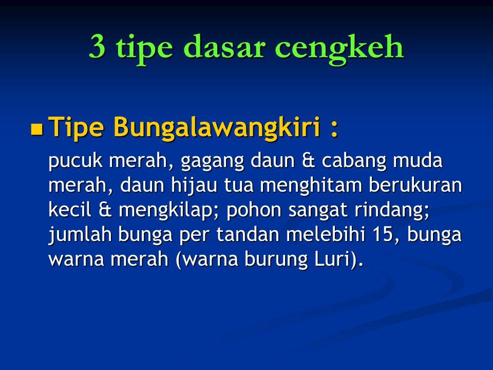 3 tipe dasar cengkeh Tipe Bungalawangkiri :