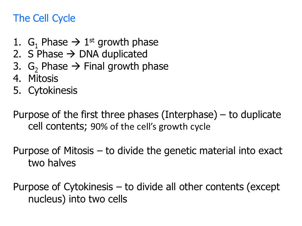 The Cell Cycle 1. G1 Phase  1st growth phase. 2. S Phase  DNA duplicated. 3. G2 Phase  Final growth phase.