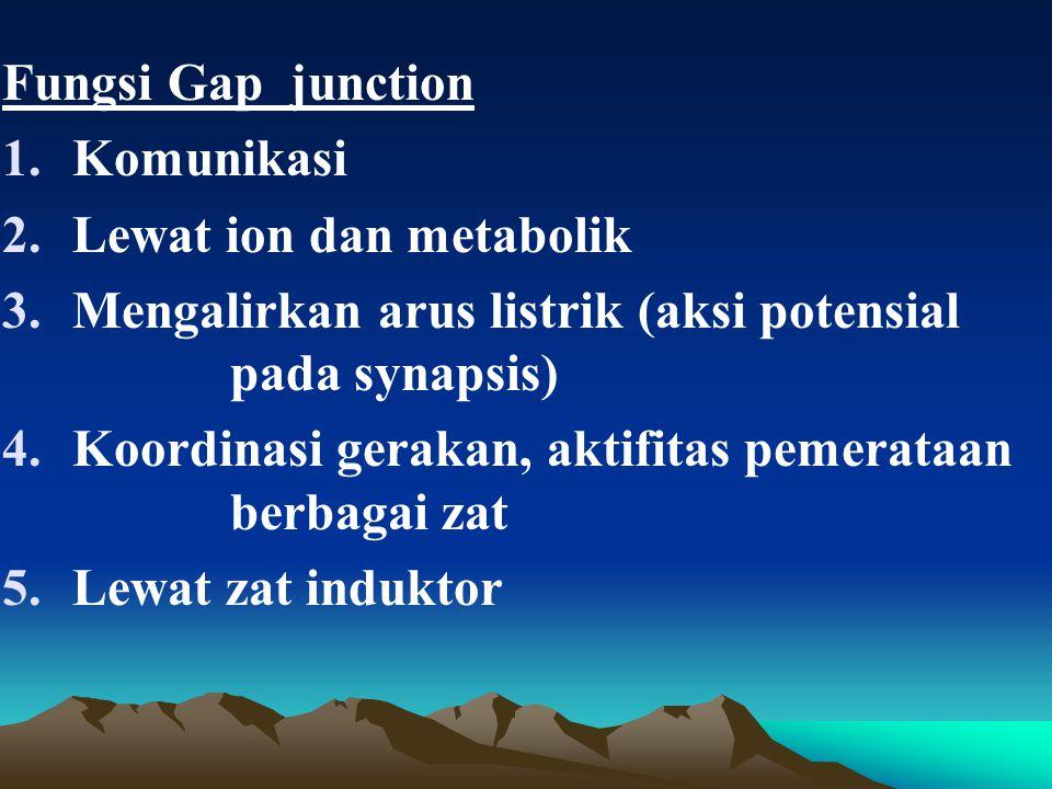 Fungsi Gap junction Komunikasi. Lewat ion dan metabolik. Mengalirkan arus listrik (aksi potensial pada synapsis)