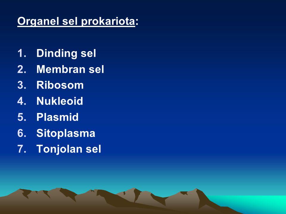 Organel sel prokariota: