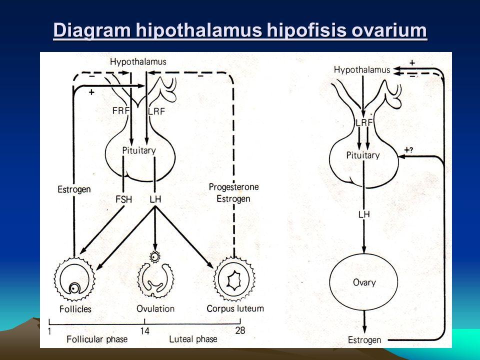 Diagram hipothalamus hipofisis ovarium