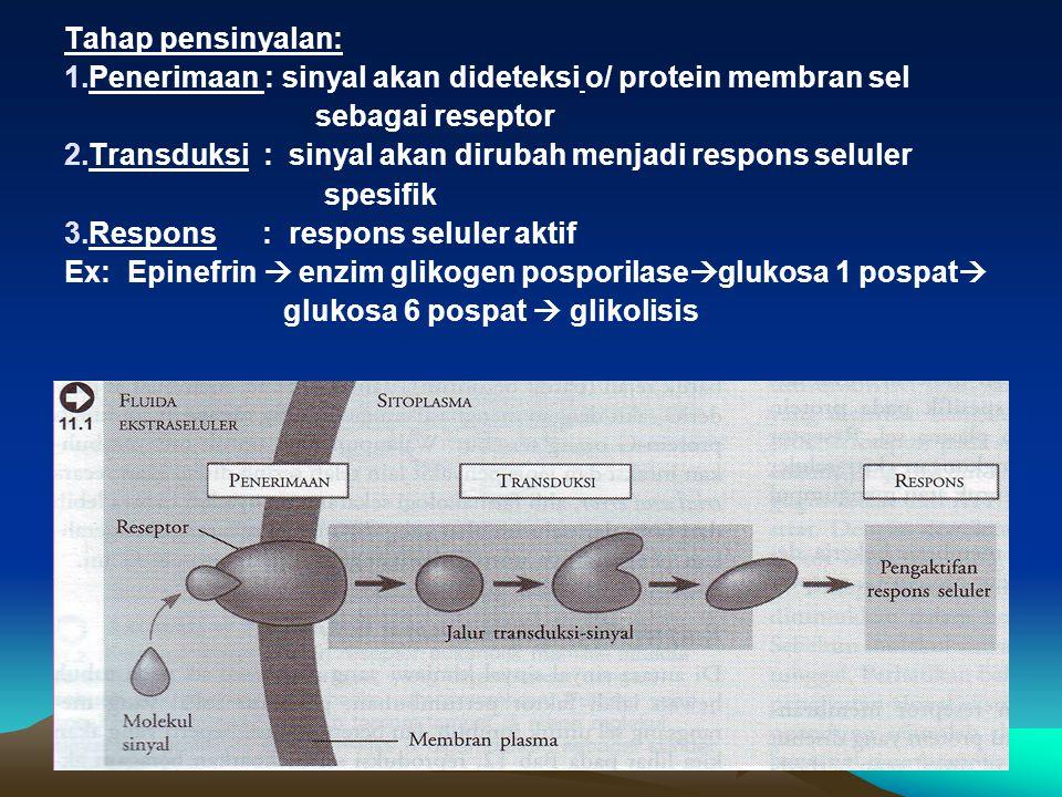 Tahap pensinyalan: Penerimaan : sinyal akan dideteksi o/ protein membran sel. sebagai reseptor.